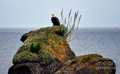 Photograph - Eagle Resting by Phillip Garcia