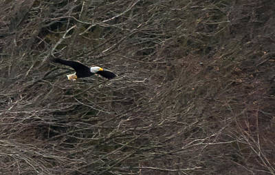 Wall Art - Photograph - Eagle by Scott Hafer