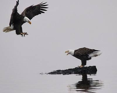 Bird Photograph - Eagle Series 1 by DK Hawk