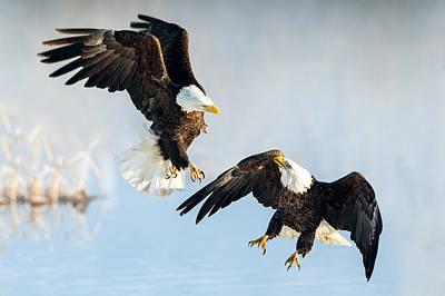 Eagle Showdown Art Print