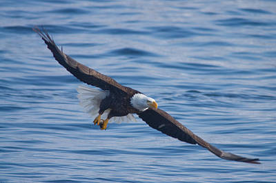 Photograph - Eagle Soaring by Larry Bohlin