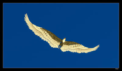 Digital Art - Eagle Soaring... by Tim Fillingim