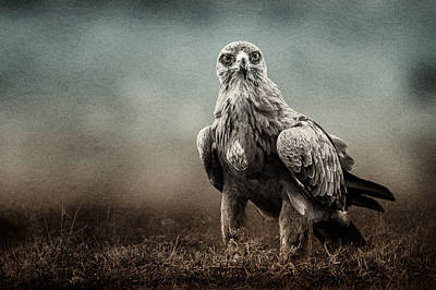 Photograph - Eagle Stare Texture Blend by Mike Gaudaur