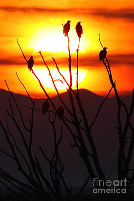 Photograph - Eagle Sunset by Bill Singleton