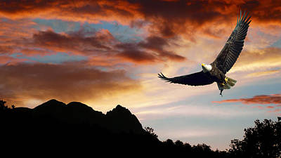 Eagle In Flight Photograph - Eagle Sunset by Daniel Hagerman
