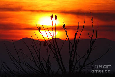 Photograph - Eagle Sunset H by Bill Singleton