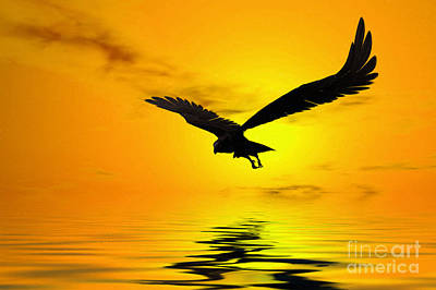 Animals Digital Art - Eagle Sunset by John Edwards