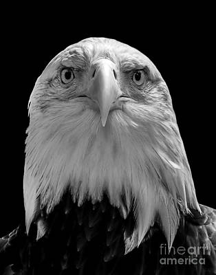 Photograph - Eagle Two by Ken Frischkorn