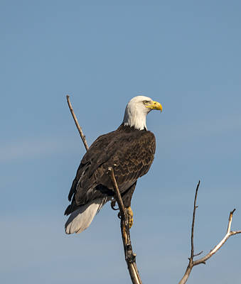 Photograph - Eagle View by Loree Johnson