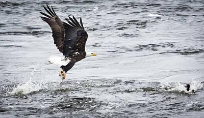 Photograph - Eagle Watch by Ricky L Jones