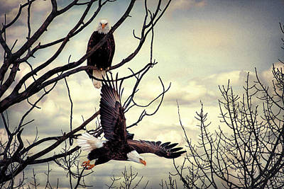 Eagle Watching Eagle Art Print by Gary Smith