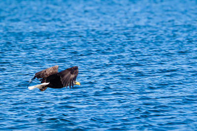 Soap Suds - Eagle With Catch  by Lars Lentz