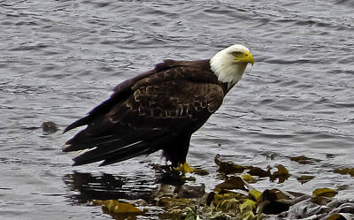 Art Print featuring the photograph Eagle3 by Timothy Latta