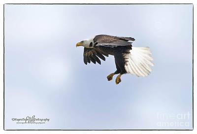 Eaglelanding Approach Art Print by Wayne Bennett