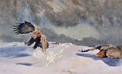 Wintry Drawing - Eagles And Rabbit, 1922 by Bruno Andreas Liljefors