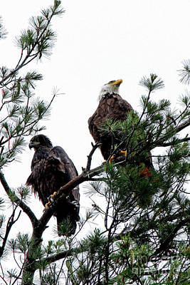 Photograph - Eagles by Butch Lombardi