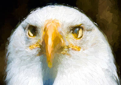 Photograph - Eagle's Eyes - Painterly by Les Palenik