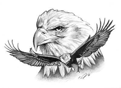 Soaring Drawing - Eagles by Jason VanderHoff