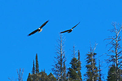 Photograph - Eagles by Jon Emery