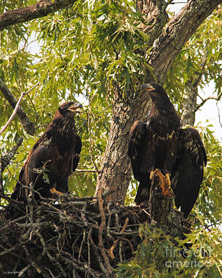 Photograph - Eaglets A Final Portrait by Jai Johnson