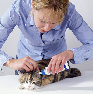 Pet Care Photograph - Ear Drops For Cat by John Daniels
