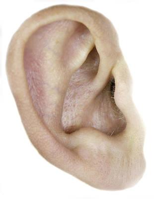 Photograph - ear by Henrik Petersen
