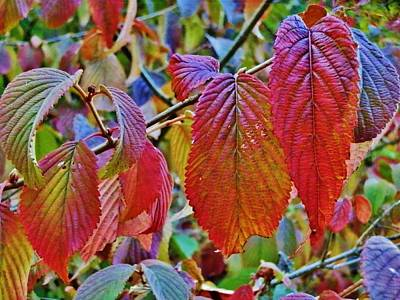 Photograph - Early Autumn Leaves by VLee Watson