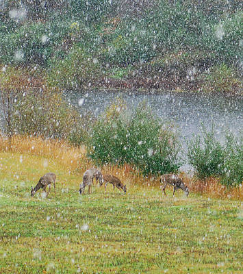 Photograph - Early Autumn Snow by Amy Porter