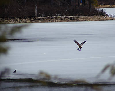Winter Photograph - Early Bird Catches The Fish by Mary Vinagro