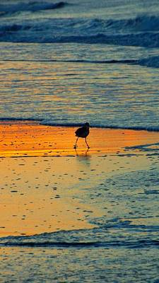 Photograph - Early Bird by Cindy Croal