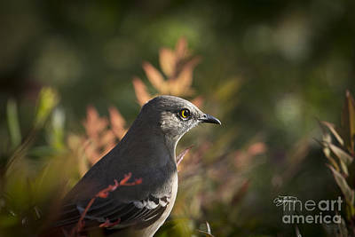 Photograph - Early Bird by Cris Hayes