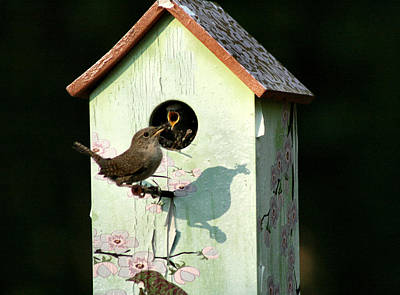 Photograph - Early Bird Gets The Worm by Sharon McLain