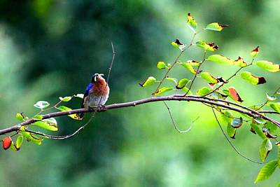Photograph - Early Bird by Tracy Male