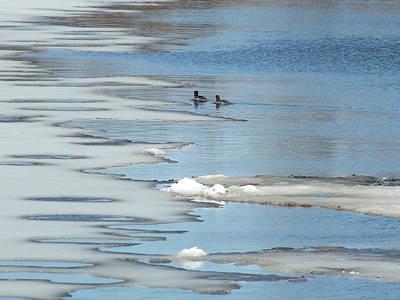 Photograph - Early Birds 1 by Gene Cyr