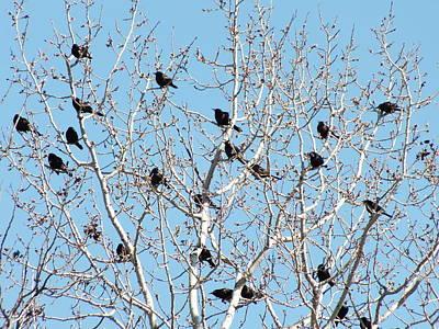 Photograph - Early Birds 5 by Gene Cyr