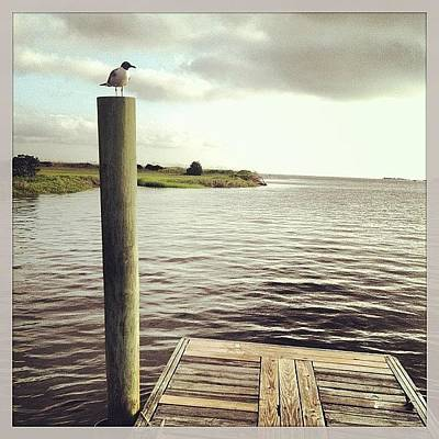 Marsh Photograph - Early Chat #seagull #hiddendock #bhi by M Wilson