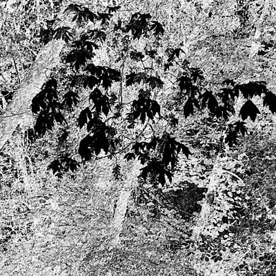 Jerry Sodorff Royalty-Free and Rights-Managed Images - Early Fall Color 26311 Graphic Pen by Jerry Sodorff