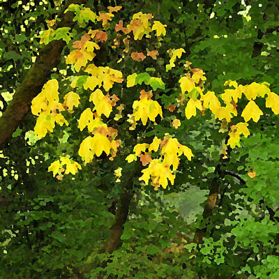 Pallet Knife Photograph - Early Fall Color 26311 Pknife by Jerry Sodorff