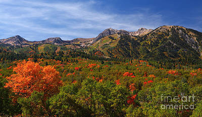 Photograph - Early Fall Color by Bill Singleton