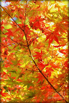 Photograph - Early Fall by Lisa Conner