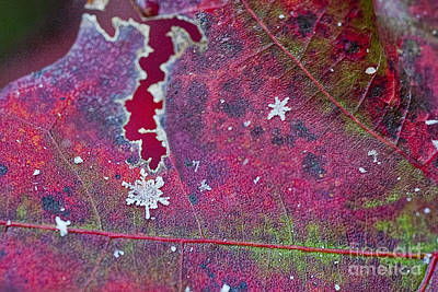 Early Fall Snow Flakes Art Print by Dan Friend