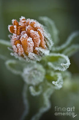 Photograph - Early Frost by Alana Ranney