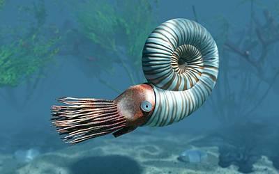 Mesozoic Era Photograph - Early Jurassic Ammonite by Walter Myers