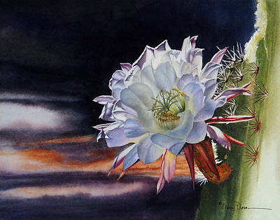 Painting - Early Morning Argentine Giant Cactus Flower by Mary Dove