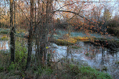 Photograph - Early Morning At Collins Creek by Jim Vance