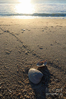 Photograph - Early Morning Clams by Mary Haber