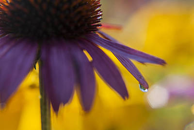 Photograph - Early Morning Dew Drops by Amber Kresge