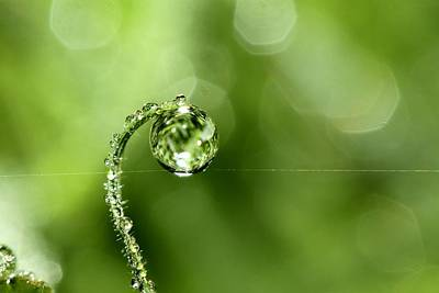 Photograph - Early Morning Dew by Sharon Johnstone