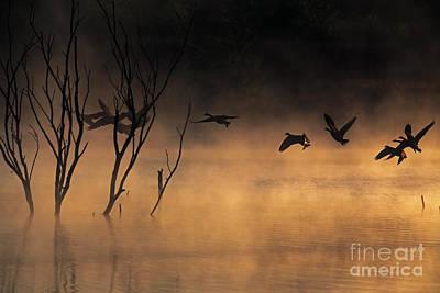 Early Morning Flight Art Print by Elizabeth Winter