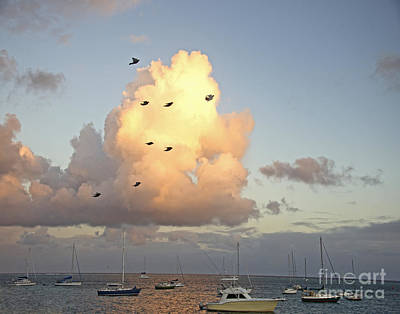 Photograph - Early Morning Flight by Joan McArthur